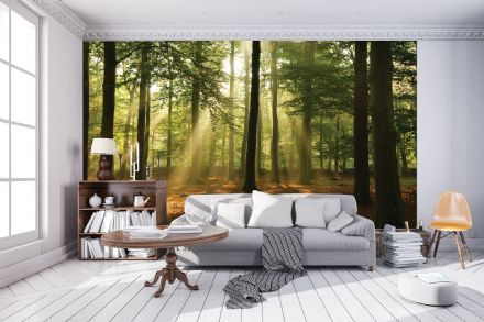 Wall mural photo wallpaper Green forest Summer Time